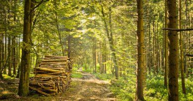 Értesítés körzeti erdőtervezési eljárásban hozott határozatról