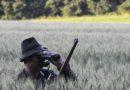 Tájékoztató vadkárelhárító vadászat megtartásáról